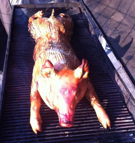 Her er grisen