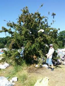 Campingstoltræet